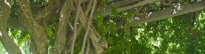 観葉植物レンタル・リースのGOODGREEN