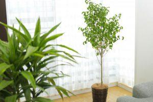 アイキャッチ_個人宅のレンタル観葉植物