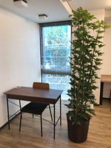 埼玉のレンタル観葉植物_3_オフィスのホンコンカポック