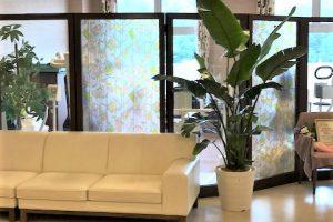 アイキャッチ_病院・介護施設のレンタル観葉植物