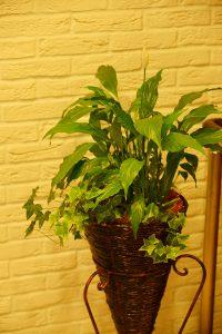 ギフト向け観葉植物_1