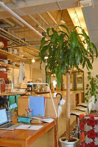 レストラン・カフェの観葉植物_1
