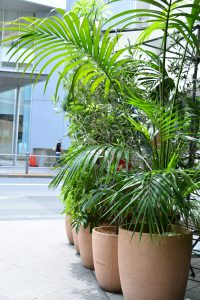 各種施設の観葉植物_2