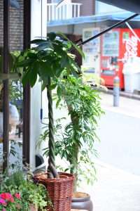 美容院の観葉植物_2