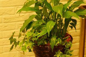 PJ_ギフト向け観葉植物_1_寄せ植え小鉢