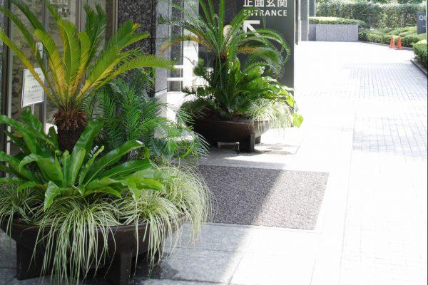 PJ_埼玉の観葉植物