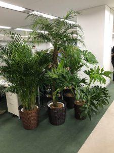 観葉植物レンタル_特殊商品_コンセプトグリーン