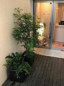 観葉植物レンタル_特殊商品_寄植え2