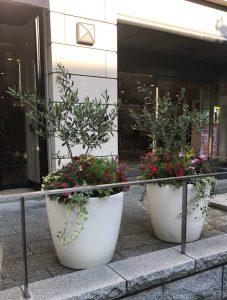 観葉植物レンタル_特殊商品_寄植え