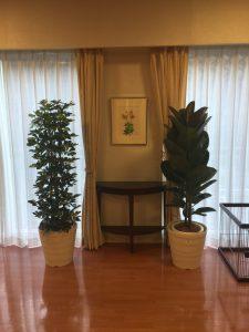 介護施設_観葉植物レンタル_3