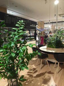 愛知のレンタル観葉植物_2_カフェのコーセーチャメドレア