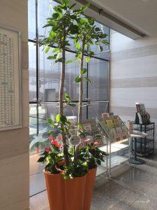 愛知のレンタル観葉植物_1_寄せ植えのアルテシマ
