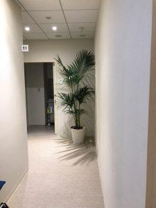 病院・介護施設のレンタル観葉植物_2_ケンチャヤシ
