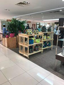 神奈川のレンタル観葉植物_3_百貨店のケンチャヤシとオーガスタ
