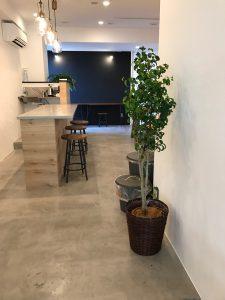 オフィスのレンタル観葉植物_3_シタシオン