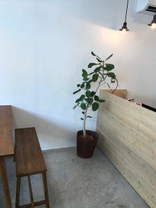 各種施設のレンタル観葉植物_3_塾のベンガレンシス