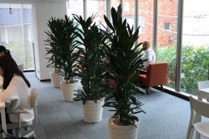 アイキャッチ_オフィスのレンタル観葉植物