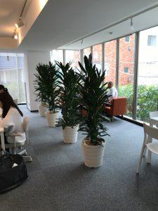 オフィスのレンタル観葉植物_5_グローカルのパーテーション