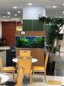 病院・介護施設のレンタル観葉植物_3_ソング・オブ・ジャマイカ