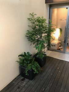 各種施設のレンタル観葉植物_2_店舗前の寄植えとシマトネリコ