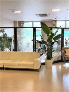 病院・介護施設のレンタル観葉植物_4_オーガスタ