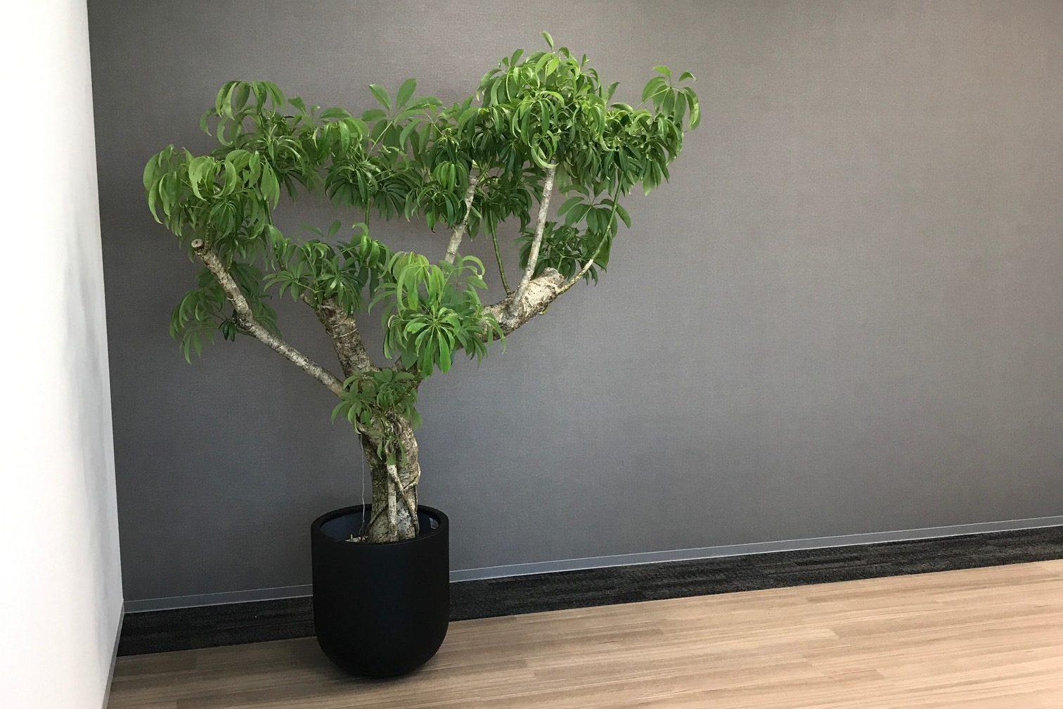 アイキャッチ_各種施設のレンタル観葉植物