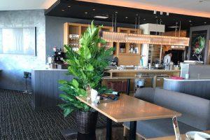アイキャッチ_カフェ・レストランのレンタル観葉植物