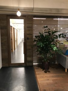 オフィスのレンタル観葉植物_2_コーセーチャメドレア