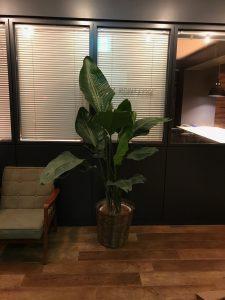 港区のレンタル観葉植物_1_コワーキングスペースのオーガスタ