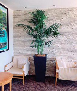 沖縄のレンタル観葉植物_1_コーナーのアレカヤシ