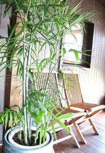 沖縄のレンタル観葉植物_2_エントランスのセフリジ