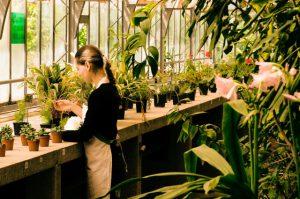 観葉植物をショップやホームセンタで購入する