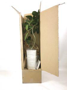 観葉植物の発送時の梱包写真