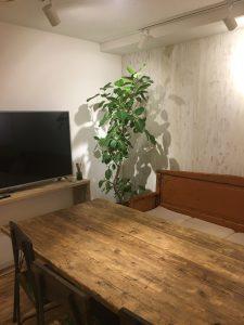 横浜のレンタル観葉植物_2_会議室のゴムの木