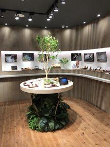 ショップのレンタル観葉植物_5_シンボルツリーのベンジャミン(川崎)