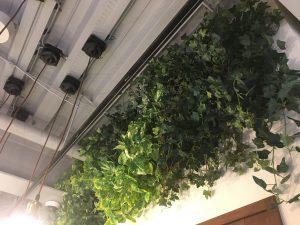 横浜のレンタル観葉植物_5_美容室の緑化パネル
