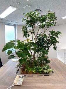 観葉植物レンタル_特殊商品_寄せ植えグリーン